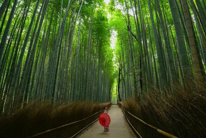 嵐山で着物レンタルをして竹林の小径